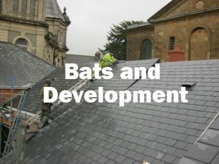 Bats and Development (Hampshire): 12th November  2020