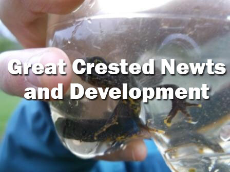 Great Crested Newts and Development (Webinar): 27th April 2021
