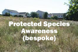 Protected Species Awareness Course: Bespoke CPD course for architects, developers, estate agents and land managers