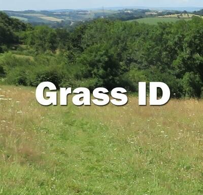 Grass ID (Hampshire): 12th July 2021