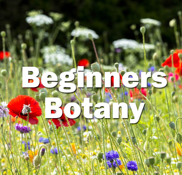 Beginners Botany (Exeter): 25th & 26th June 2021