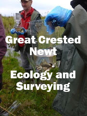 Great Crested Newt Ecology and Surveying (Somerset): 3rd & 4th June 2021