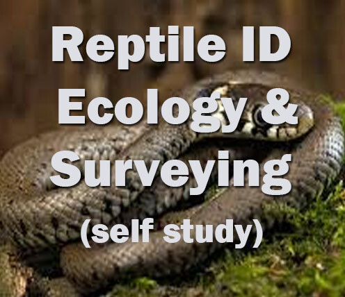 Reptile Ecology and Surveying Self-study course