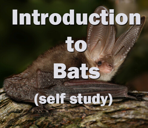 Bats: Introduction to Bats Self-study course
