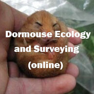 Dormouse Ecology and Surveying - online course