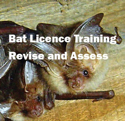 Bat Licence Training - Revise and Assess - TBC
