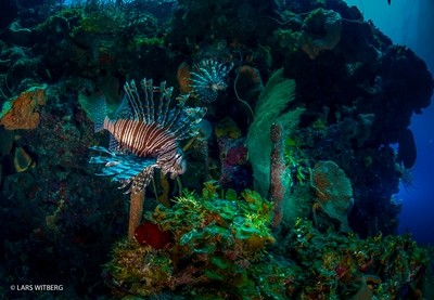 Lion Fish, Bahamas