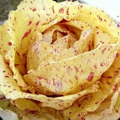 Radicchio misto variegato (1kg)