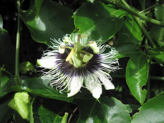 Fleur Equatoriale - circuit Équateur