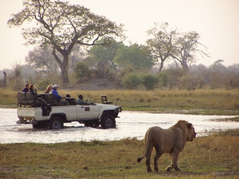 Kwara lion encounter