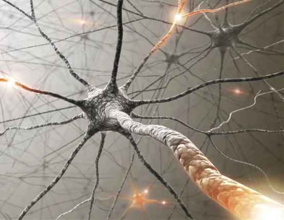 The study shows how the human brain moves through physical space and follows the location of others