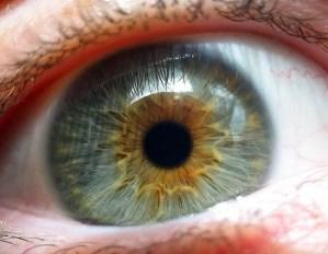 New photoreceptors from human pluripotent stem cells restore vision to injured retinas