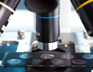 3D microscopy sheds light on the body's immune response to obesity