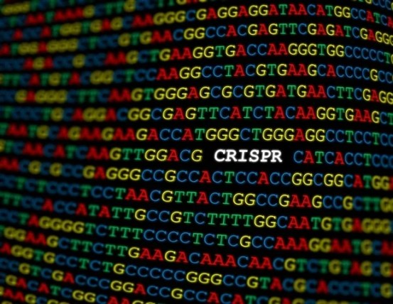 DNA origami used to analyze the ultrafast movements of CRISPR enzymes