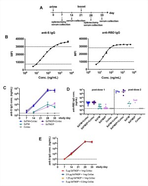 Preclinical study reveals immune benefit in uncooled Soligenix coronavirus vaccines
