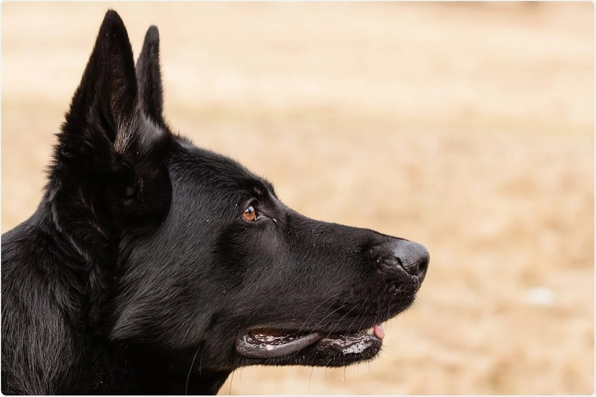 Study: COVID-19 Sniffer Dog experimental training: which protocol and which implications for reliable identification? Image Credit: Jarry / Shutterstock