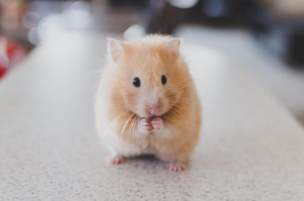 cute hamster jobs malaysia offer letter