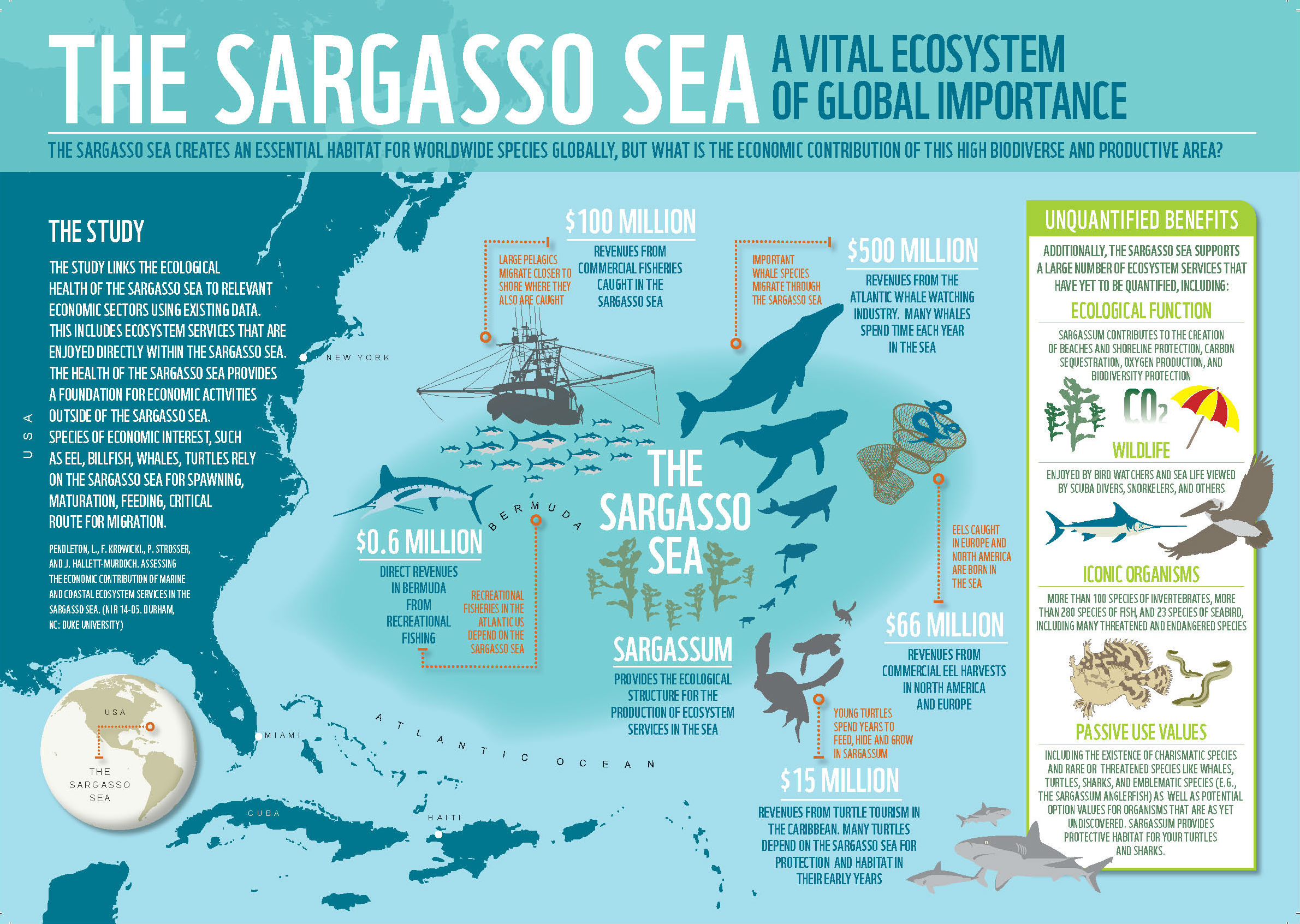 Infographic Ecosystem Services Of The Sargasso Sea