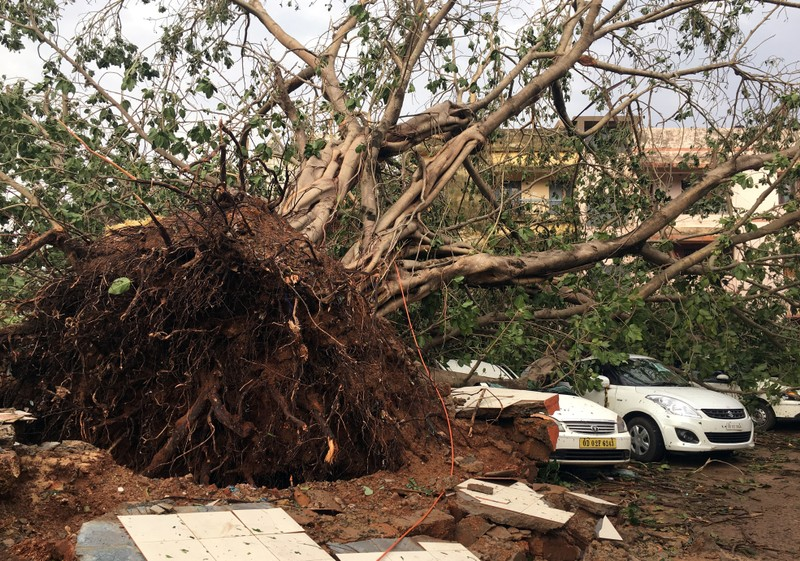 Cars are damaged by an uprooted tree in a residential area following Cyclone Fani in Bhubaneswar