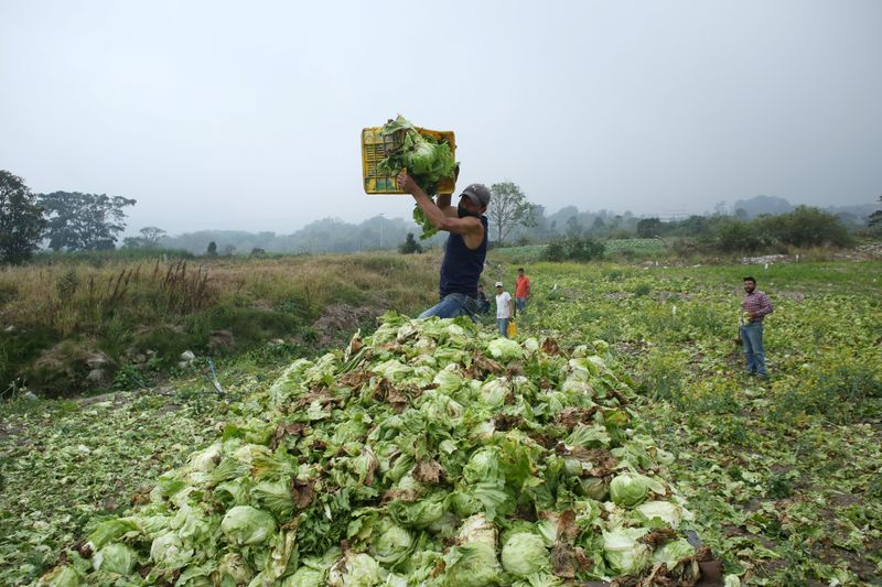 Hungry Venezuela's crops rot in fields for lack of fuel
