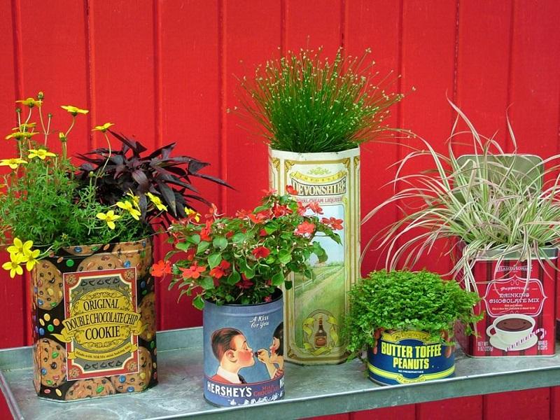 Aromatic garden cuttings