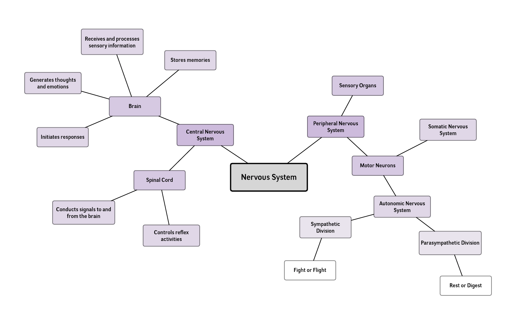 Nervous System Mind Map Template