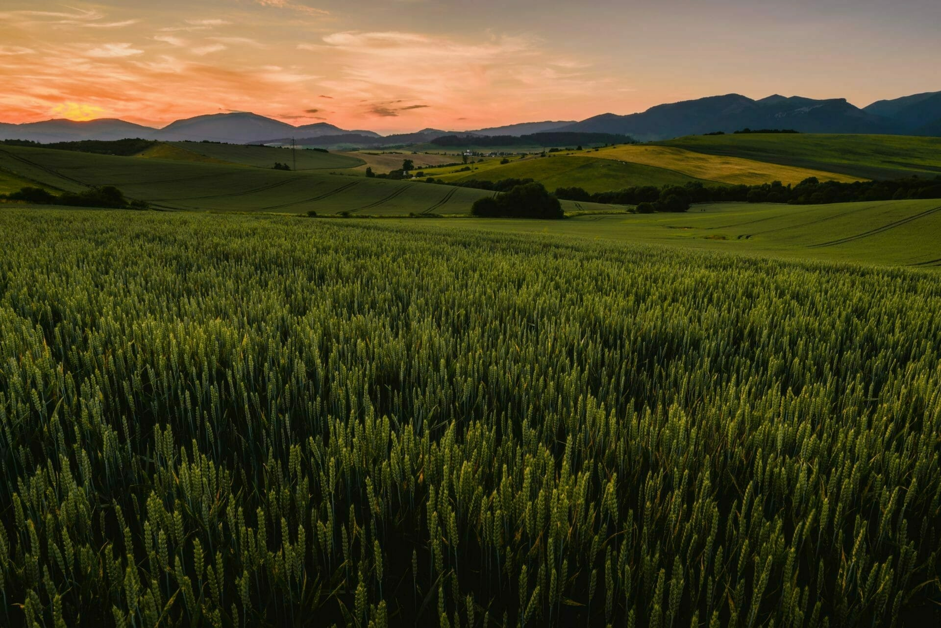 picture of grassy field and farm land for Real Estate News for Investors Podcast Episode #590