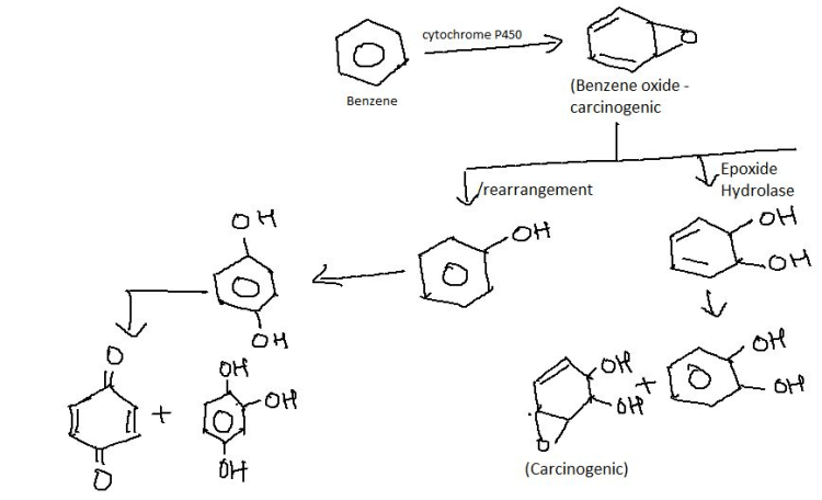 cytochrome P450 (Benzene oxide - carcinogenic Benzene Epoxide Hydrolase rearrangement O H OH OH tA Or 애 otf OH (Carcinogenic)