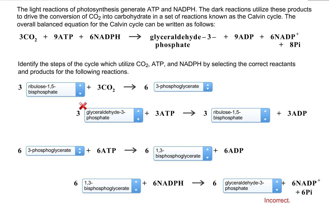 Solved The Light Reactions Of Photosynthesis Generate Atp