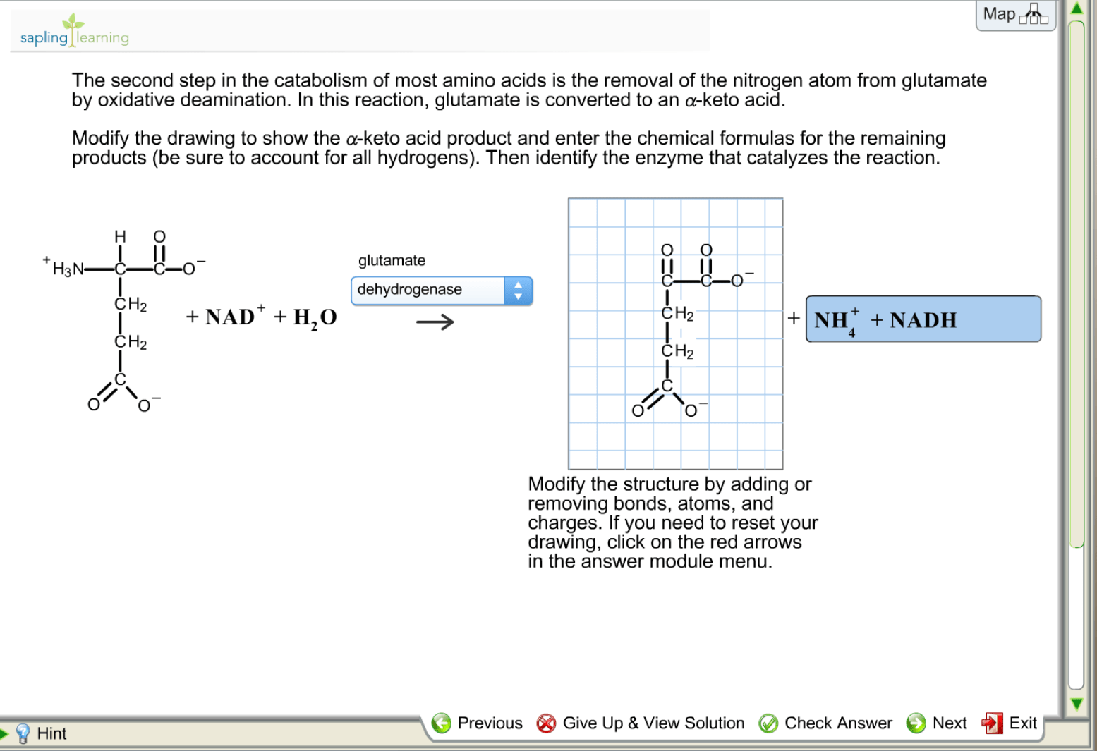 Solved The Second Step In The Catabolism Of Most Amino Ac