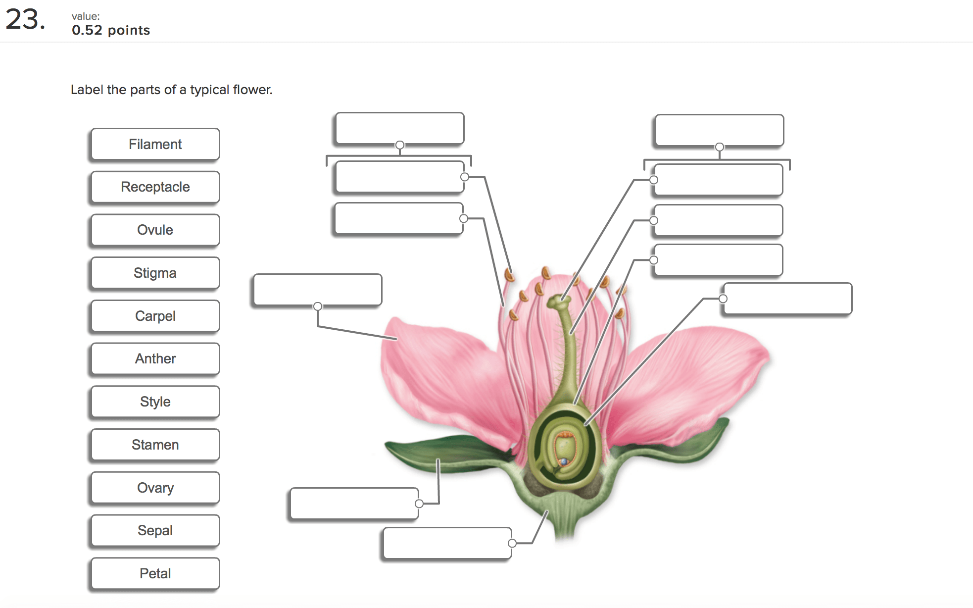 Flower Parts And Functions Worksheet