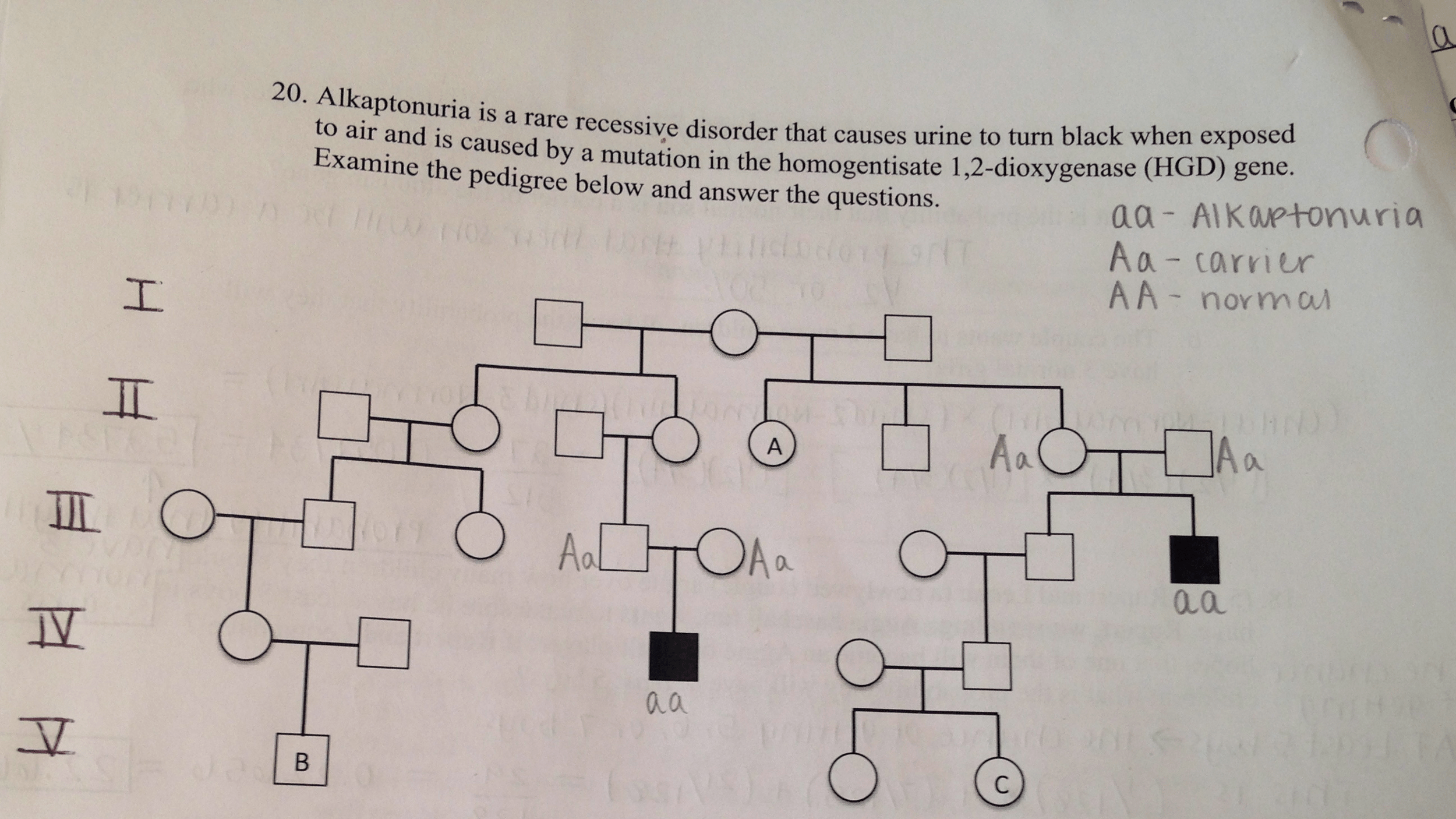 Solved Genetics Probability Pedigree Questions Question