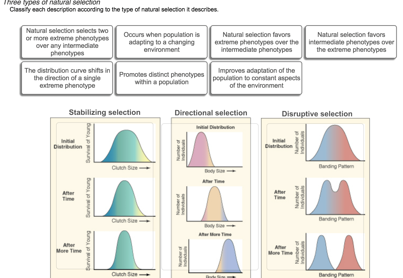 Solved Three Types Of Natural Selection Classify Each Des