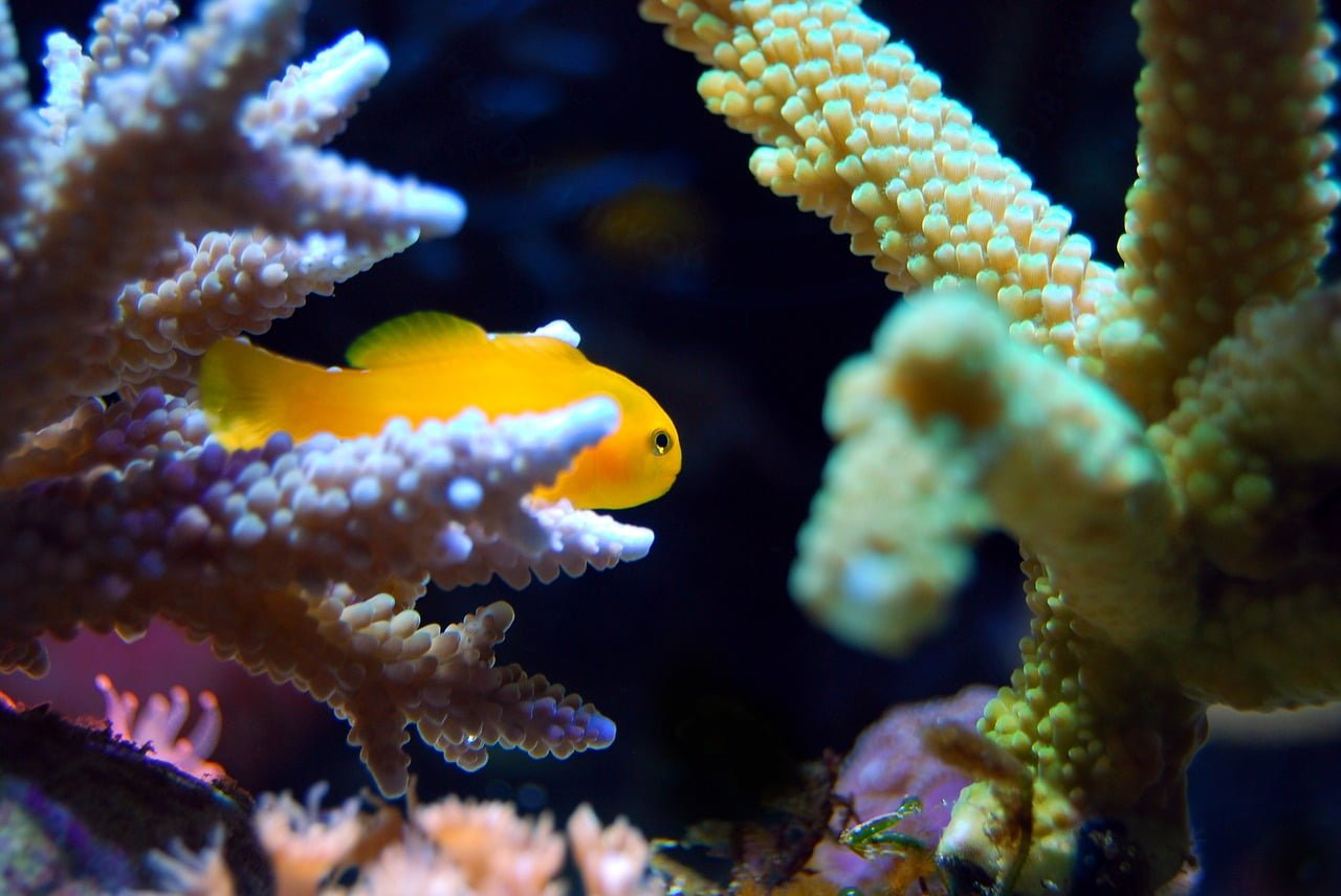 Noaa S Coral Reef Conservation Program Awarded 9 3