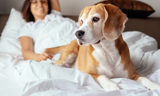 4 Tips for Traveling with Your Furry Friend