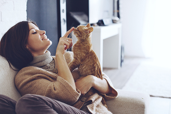 How to Train Your Cat - If the thought of training your pet cat seems like a difficult feat, consider the daunting task of training one of nature's