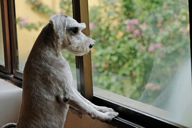 Manage Pet Separation Anxiety
