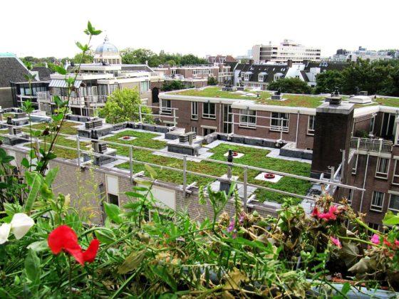 Subsidie voor groene daken in Amsterdam - Cobouw.nl