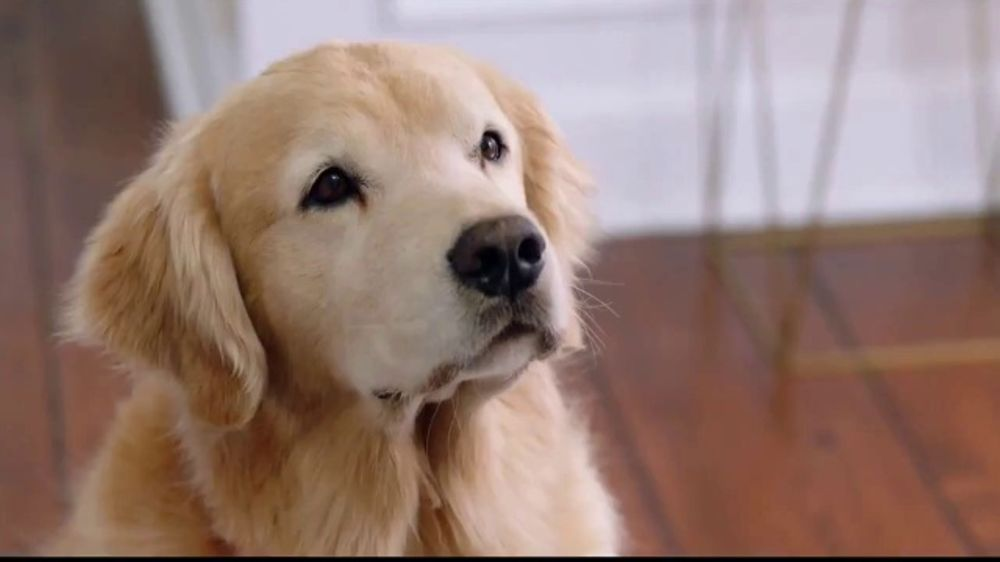 Wag TV Commercial On Demand Dog Walking Featuring Olivia Munn ISpottv