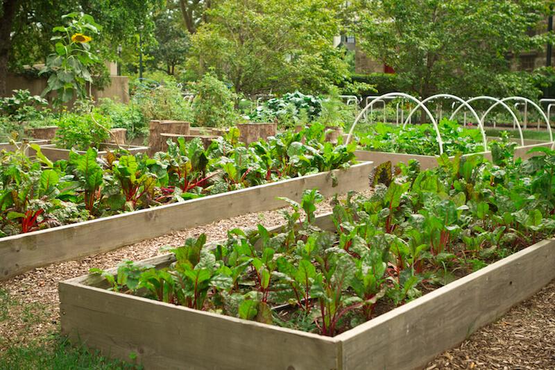 24 Fantastic Backyard Vegetable Garden Ideas on Vegetable Garden Ideas For Backyard id=79756