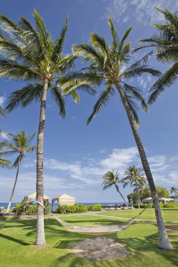 30 Spectacular Backyard Palm Tree Ideas on Palm Tree Backyard Ideas id=48537