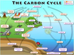 Lab 2: The Global Carbon Cycle