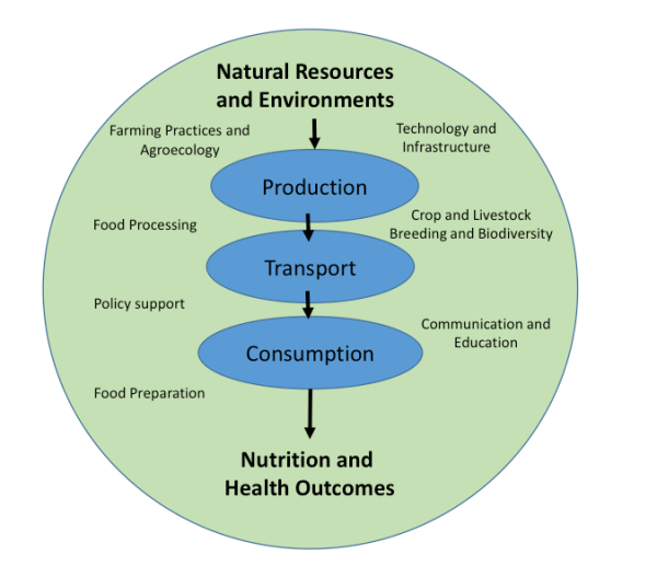 Simplified diagram of food system