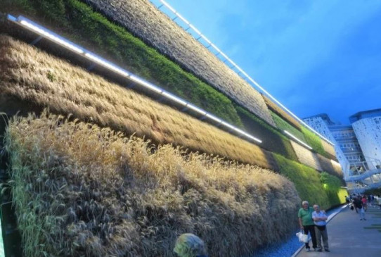 Wonderful: Unique country of the world where there is cultivation on the walls, vegetables are grown.
