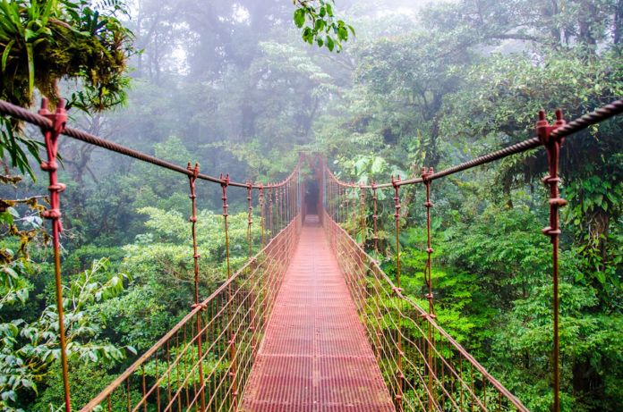 Misty bridge running through the Monteverde rainforest in Costa Rica
