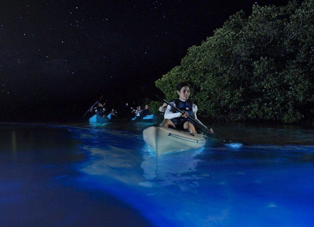 Puerto Rico Bioluminescent Bays Boat Tours