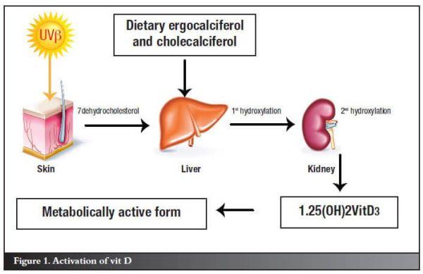 The Ultimate Guide to Vitamin D | PaleoHacks Blog