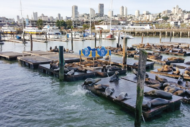 Things to Do at Pier 39 - Sealions
