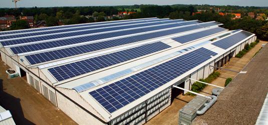 Avicultura encontra na energia solar a solução para economia energética nas granjas