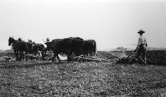 History Of Agriculture To The Second World War The